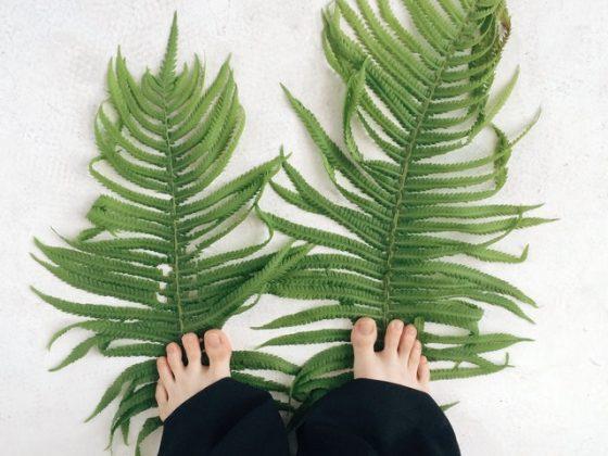 pies descalzos sobre grandes hojas de helecho
